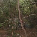 Piedra característica en el sendero Monte Aguirre de división de sendero