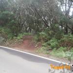 Detalla de entrada de nuevo al sendero por Majimial