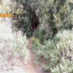 Otro detalle del sendero que sale de la pista del Rayo