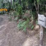Pista de Las Torrillas (foto 15)