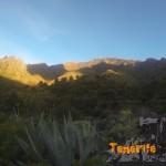 Detalle palmeral en El Cercado