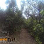 Sendero antes de la llegada a Pico del Inglés