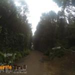 Detalle carretera vieja Pico del Inglés